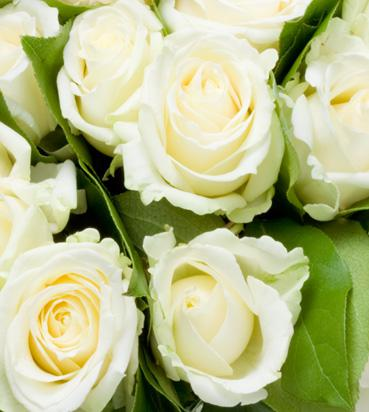 Доставка цветов florego цветы на заказ спб петрогра